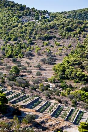 Vagia hillside