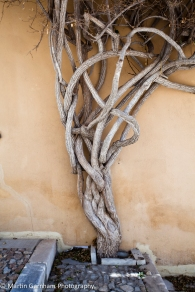 Twisted tree roots